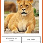 Animal Classification Cards » One Beautiful Home | Free Printable Animal Classification Cards