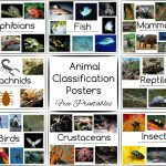 Animal Classification Posters And Games   Free Printables | Free Printable Animal Classification Cards