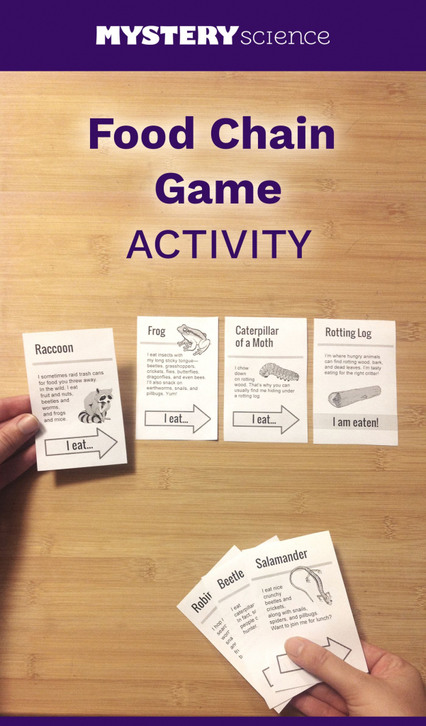 Food Chain Activity - Free Hands-On Science Activity For 4Th And 5Th | Printable Food Web Cards