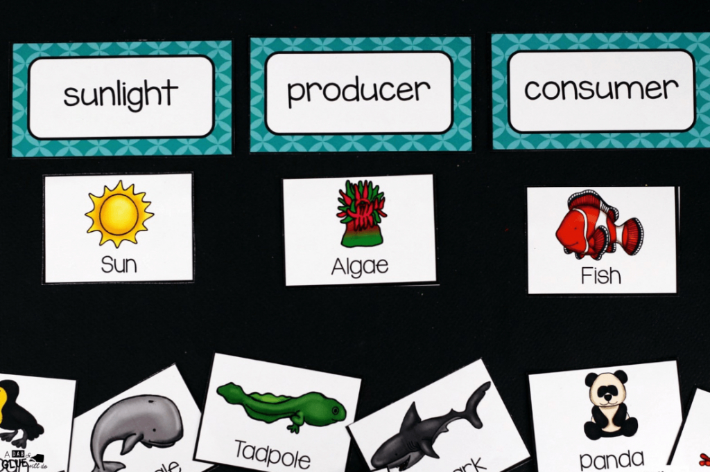 Food Chains - A Dab Of Glue Will Do | Printable Food Web Cards