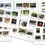 Free Montessori 3 Part Cards Archives   Homeschool Den | Free Printable Animal Classification Cards