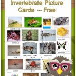 Invertebrates And Vertebrates Card Sort Free Pdf | Science | Free Printable Animal Classification Cards